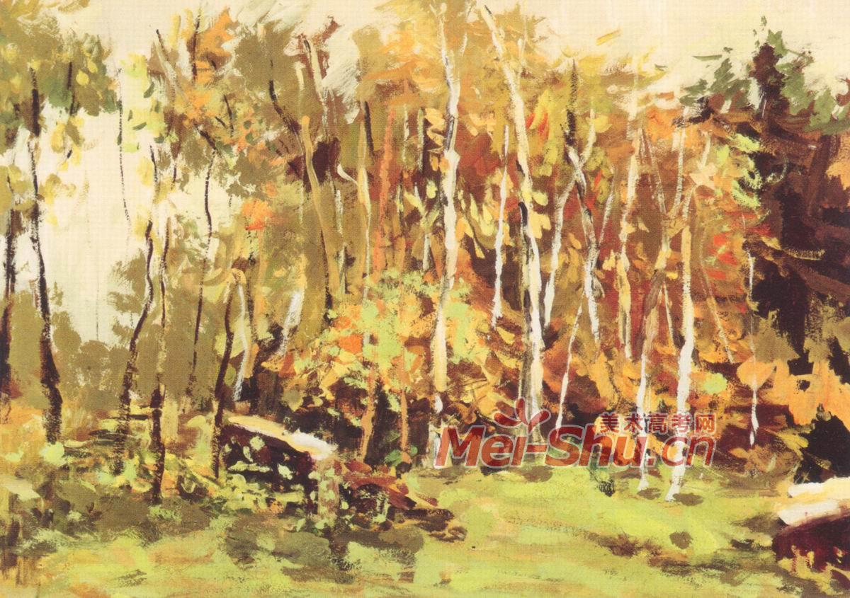 色彩风景树林森林秋天秋色秋季