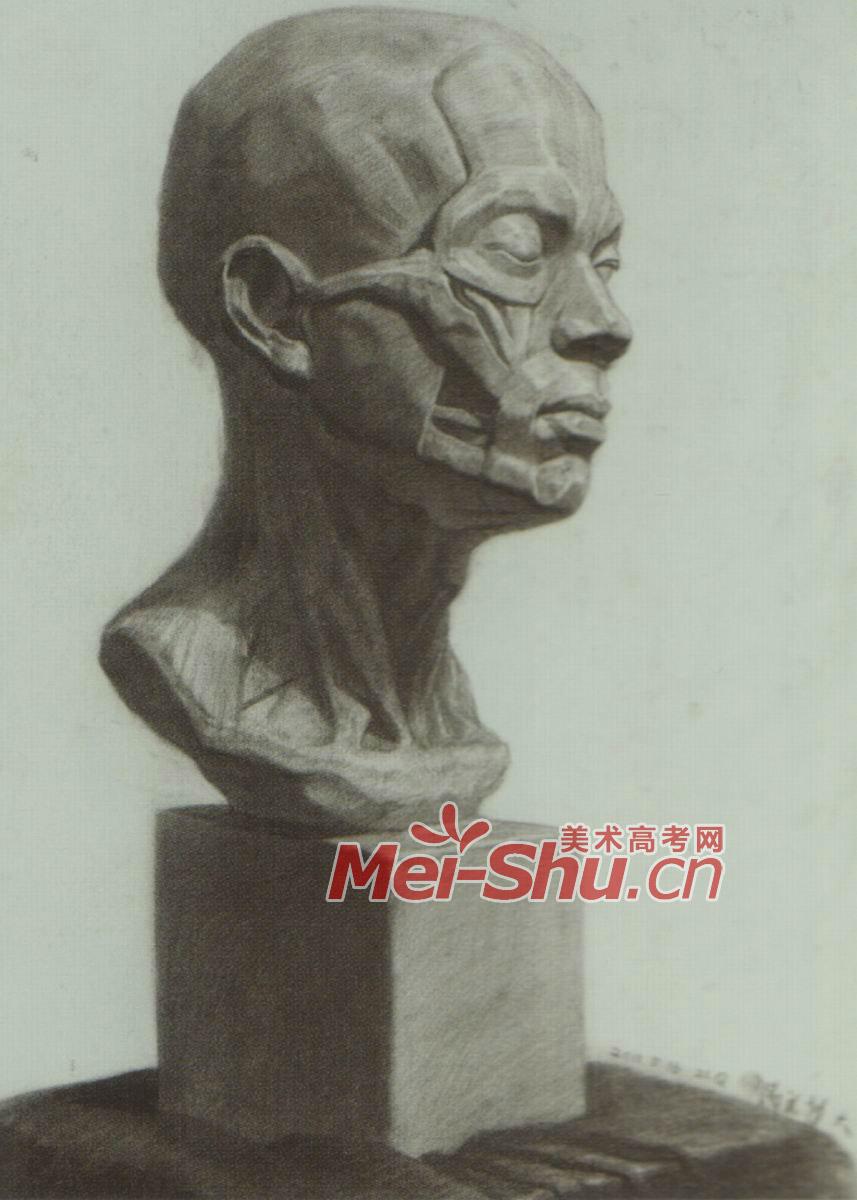 素描石膏像头像肌肉解刨石膏体模型几何头像解刨模型石膏人头像 4